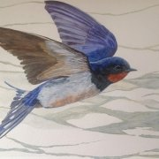 You will go the distance. Acrylic on paper of a swallow in flight by Gill Drew